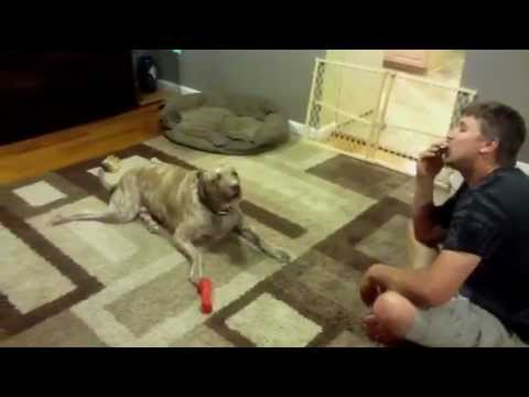 Funny singing dog