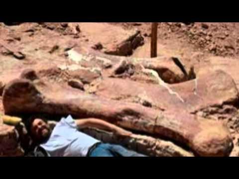 Fossilized bones of huge 100 ton dinosaur found in Argentina