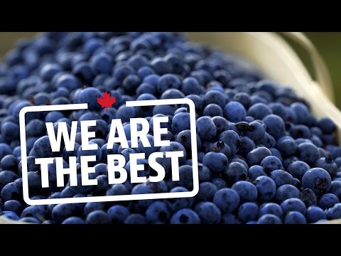 80 Million Pounds Of Blueberries All From One Farm | We Are The Best