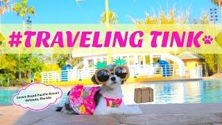 travelingtink tinkerbelle the dog visits the loews royal pacific resort orlando florida
