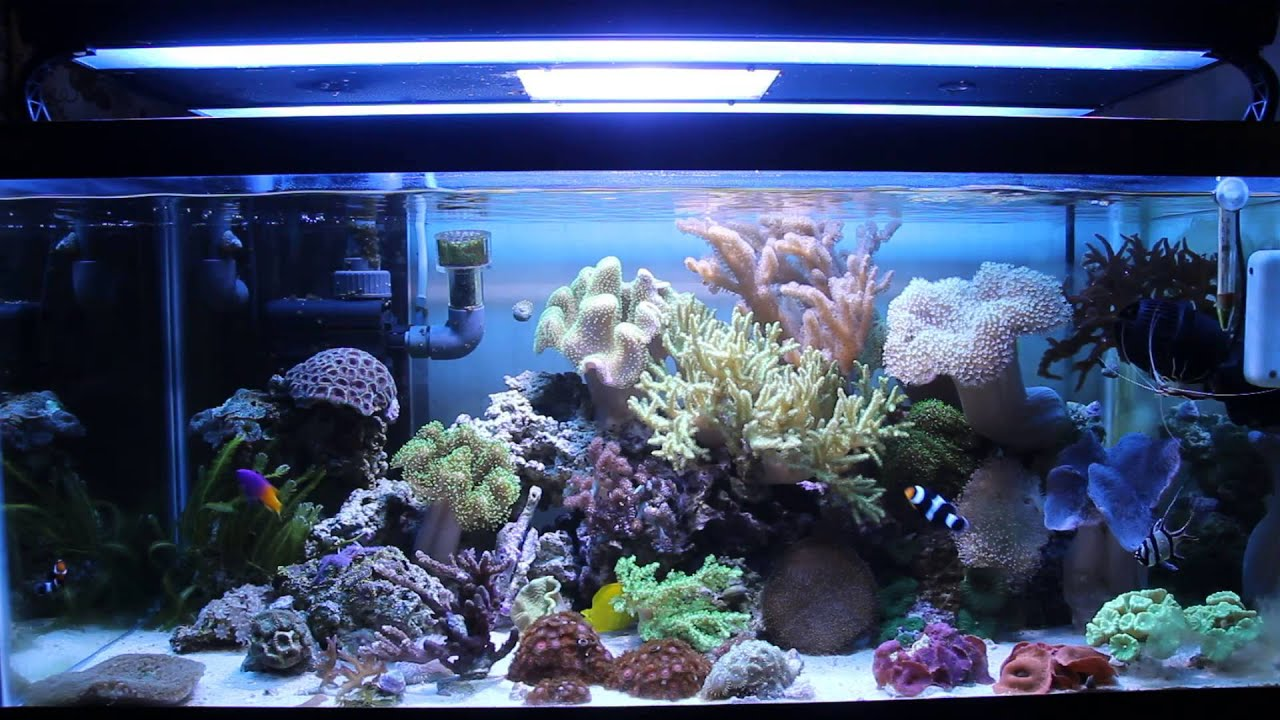 40 Gallon Soft Coral Reef Tank Youtube