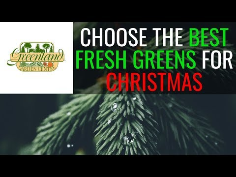 Selecting Your Fresh Greens