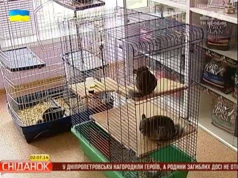 У Києві відкрився дитячий садок для тварин