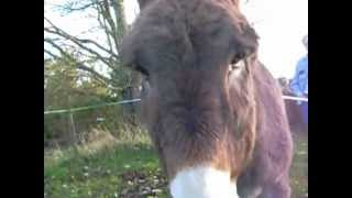 Chloé, 7 ans, filme l'âne Julios