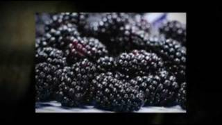 Frozen Oregon Berries Boones Ferry Berry Farms 503-678-5871 Hubbard