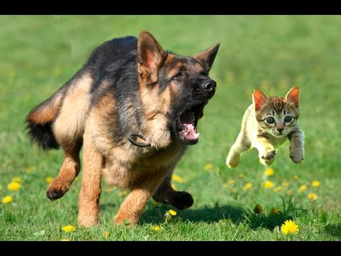How Ti Get Dog To Stoo Chasing Cat