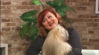 Порода собак Лхаса-апсо: особливості догляду. Ранковий коктейль 06.02.2019