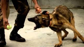 Police Dogs - Photo Essay By Benedik Bunquin For J123