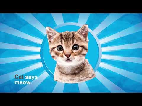 Ira Explainer Video | Letter C | Cat