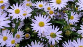 Starting A Perennial Garden