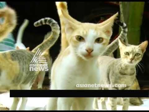 A family pets 34 cats in home at Kodungallur