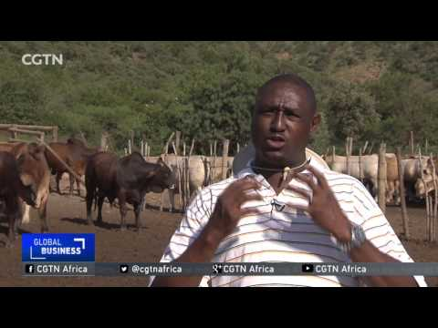 Cattle export sector thrives in Botswana