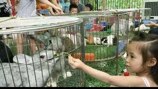Bayi bermain di Kebun binatang | Hewan Kebun Binatang Untuk Anak-anak