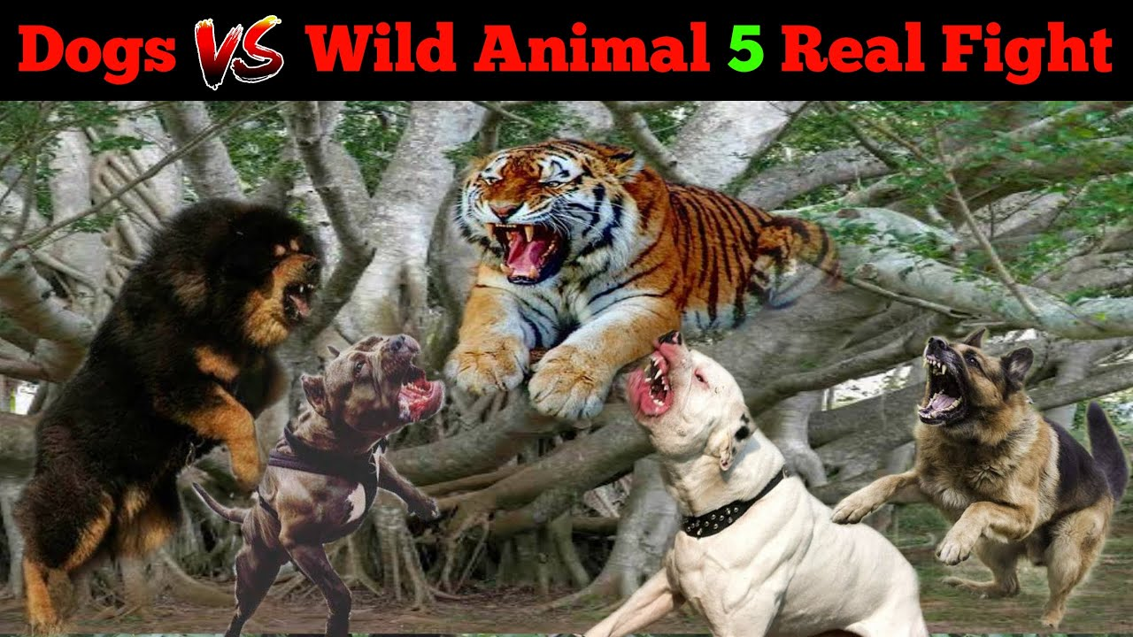 5 Times Dogs come Face to Face with Wild Animal [in Hindi] | Dogs vs Wild Animal Real fight