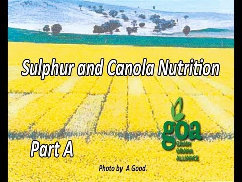 Canola's need for sulphur Part A