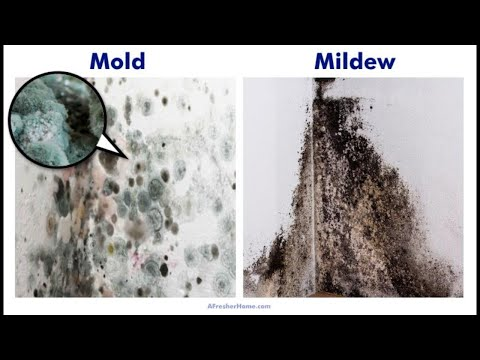 Mold vs. Mildew | Which is Worse