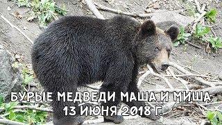 БУРЫЕ МЕДВЕДИ МАША И МИША 13 ИЮНЯ 2018 Г.