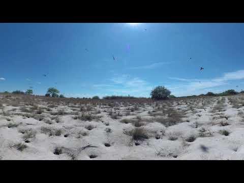360 Video of Carmine bee-eaters, Zambezi Mubala Lodge - Gondwana Collection Namibia
