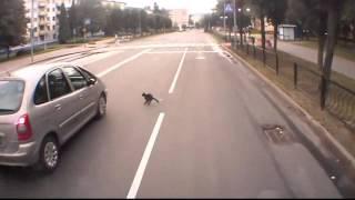 Черный кот пытается перебежать дорогу