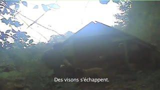 One Voice – Elevages de visons en France : rattrapés par un chien