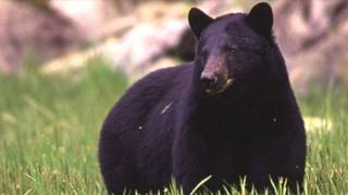 911 call audio: Deadly bear attack in New Jersey