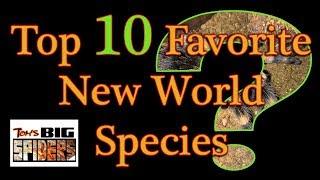 Top 10 Favorite New World Tarantulas