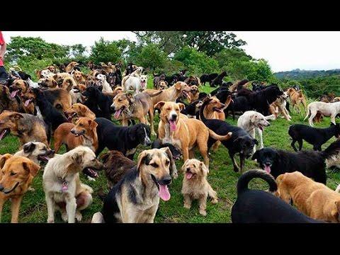 """Territorio de Zaguates """"Land of The Strays"""" Dog Rescue Ranch Sanctuary in Costa Rica"""