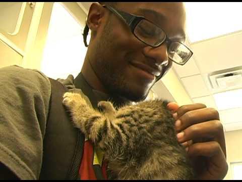 Animal House Adoption Center Video