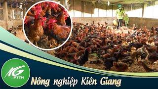 Mô hình nuôi gà sạch nhốt chuồng   THKG