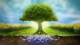 Что будет, если исчезнут все деревья