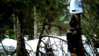 Animal Documentary Films  The Wolverine Whisperer   Full Documentary
