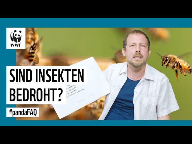 Darum sind Insekten wichtig und so kannst Du ihnen helfen. #pandaFAQ