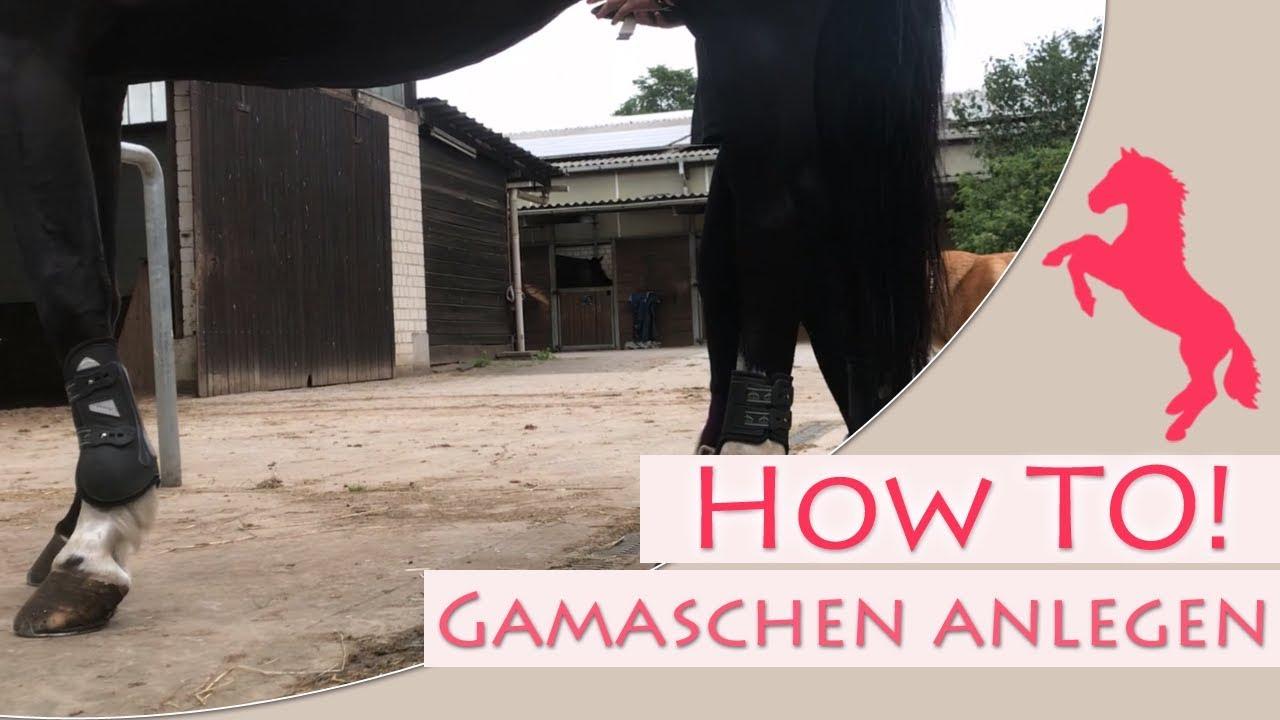 Video How to: Gamschen anlegen!