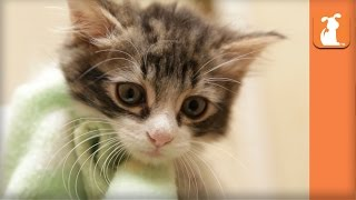 Rescue Kitten With Manx Syndrome Needs Home