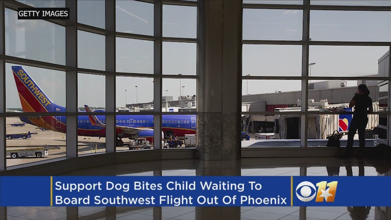 Child Injured By Support Dog While Boarding Southwest Airlines Flight