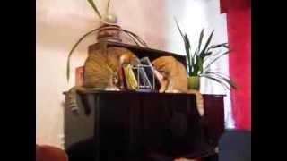 Коты и шарики Ньютона (cats and Newton balls)