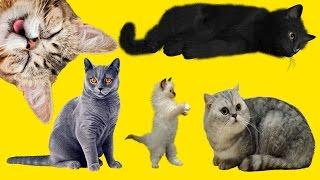 Выставка кошек | Влог едем на ВЫСТАВКУ Кошек и Котов | Породистые кошки и смешные коты