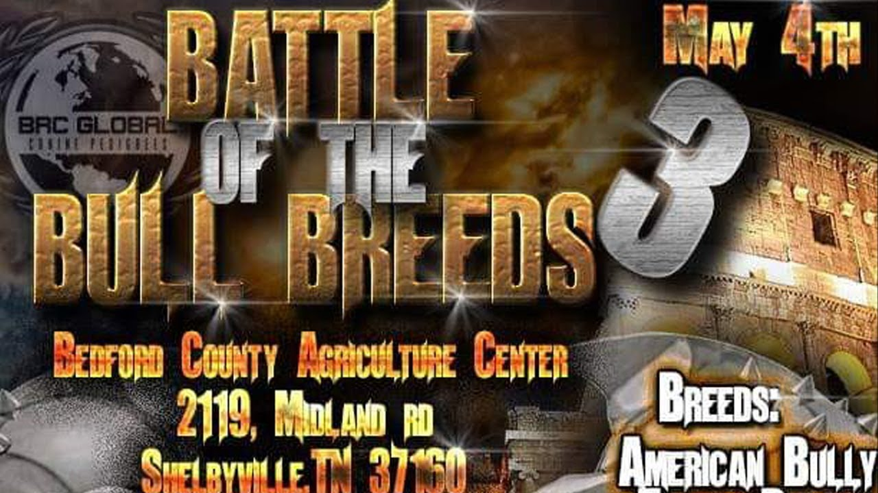 AMERICAN BULLY DOG SHOW MAY 4TH SHELBYVILLE,TN BRCGLOBAL
