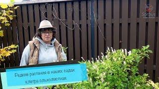 видео Питомник «AST plants (AST Russia), Бельгийский питомник»