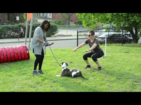 spot-on-dog-training-new-courses,-grand-opening