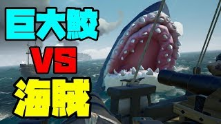 【Sea Of Thieves】今回だけは海賊同士で手を組んで巨大鮫を倒す!
