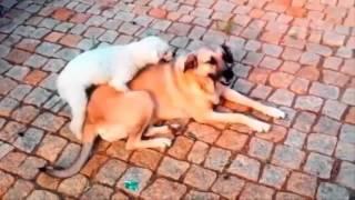 Сексуальные игры животных перед людьми