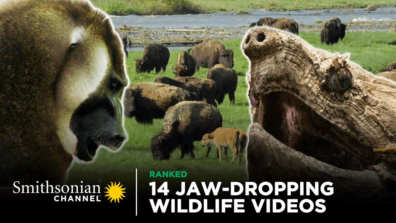 Download 14 Jaw-Dropping Wildlife Videos | Smithsonian Channel
