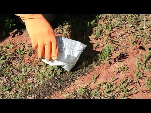 Curso Controle de Formigas Cortadeiras - Como Evitar o Ataque (Barreiras Físicas)