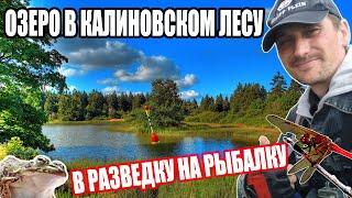 В РАЗВЕДКУ НА РЫБАЛКУ ОЗЕРО В КАЛИНОВСКОМ ЛЕСУ рыбалка паплавок кормушка лес озеро