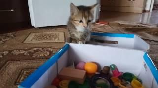 Звёдочка и коробка игрушек
