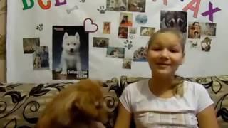 как  чистить зубы собаки