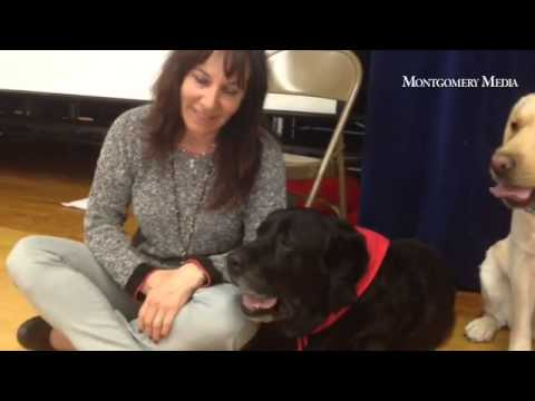 Wes, a therapy dog, enjoys his retirement 'paw-ty' at Richboro Elementary School.
