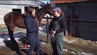 Large Animal Vet - Dr. Emily Johnson