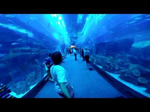 Dubai: Burj Khalifa, Burj Al Arab, Jumeirah Palm, Dubai Aquarium, Dubai Mall